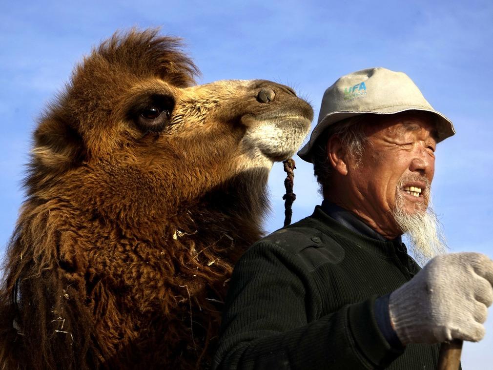 中国老人为治沙住沙漠20年 成就沙漠里的绿色屏障[图集]